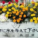 20110109153811.jpg